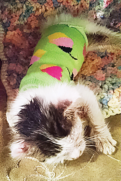 Contributed Photo  Six-week-old Hope was struggling to survive and being kept warm by heating pads, warm water bottles and sweaters that her foster mom fashioned from socks.